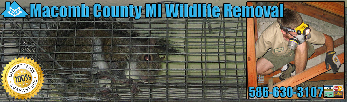 Macomb County Wildlife and Animal Removal